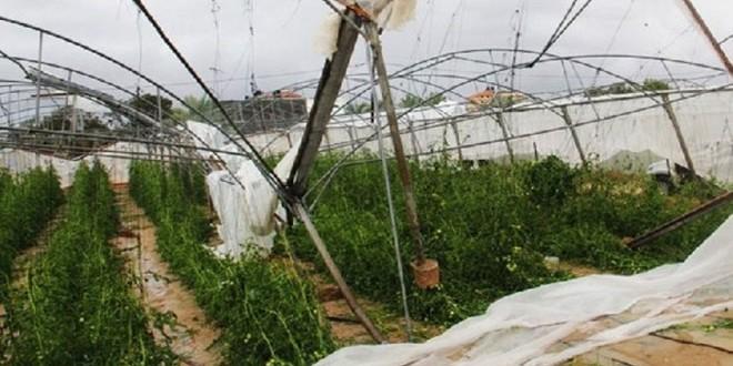 Photo of 47،7 مليار ليرة حجم الأضرار التي لحقت بالقطاع الزراعي في القنيطرة جراء الإرهاب