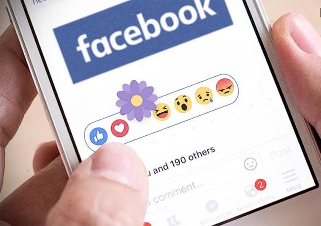 Photo of ما هو السر وراء اختيار الفيسبوك للزهرة البنفسجية الصغيرة ؟
