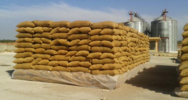 صورة مدير مؤسسة الحبوب: مخزون سورية من القمح يكفي 6 أشهر قادمة ونسبة اختلاط الشعير بالقمح وصلت لـ 40% في بعض المحافظات
