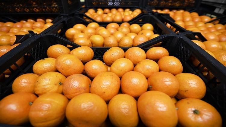 صورة وزارة الزراعة السودانية تسبب بتلف 60 % من الحمضيات السورية المصدرة إليها