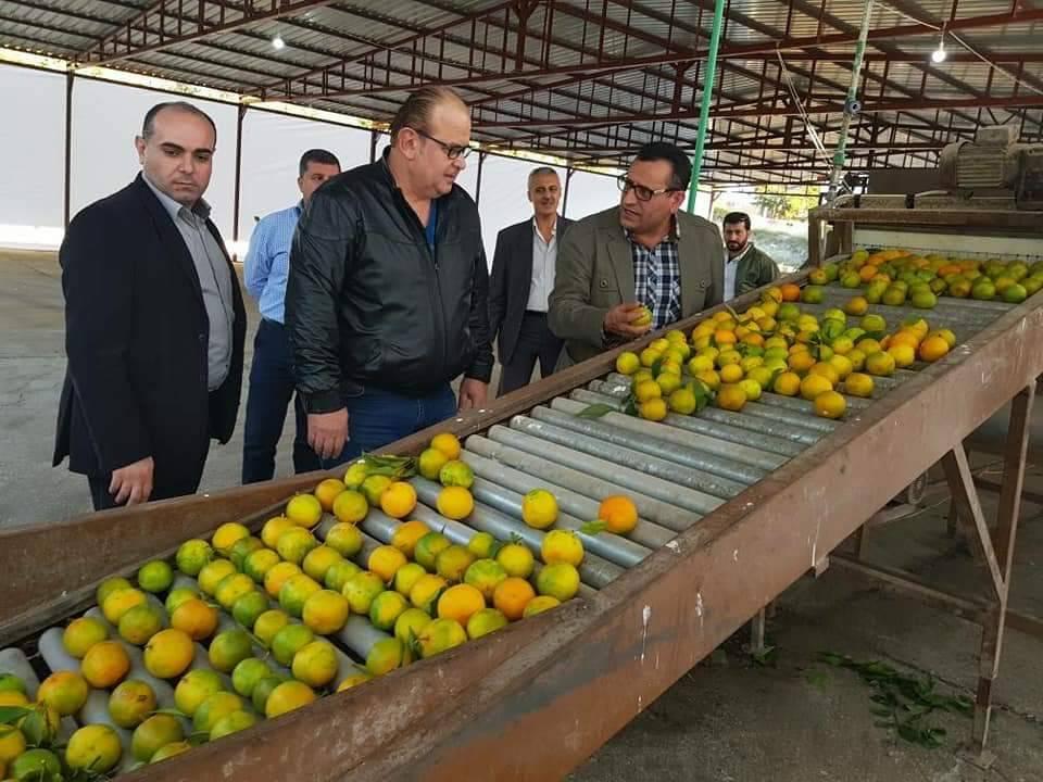"Photo of هو الأول من نوعه.. خط لفرز الحمضيات في ""السورية للتجارة"" بطرطوس"