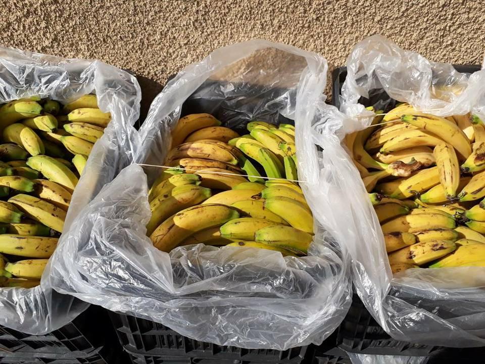صورة ضبط 500 كغ من الموز اللبناني المهرب و ورشة لتصنيع دبس الرمان المغشوش