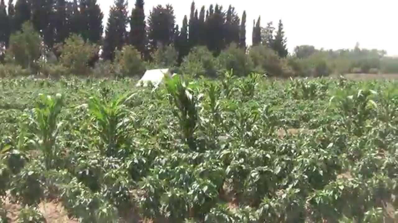 Photo of نقيب المهندسين الزراعيين بريف دمشق: خطة لزراعة وإعادة تشجير الغوطة الشرقية من جديد