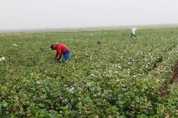 صورة حلب زرعت مليون هكتار بالمحاصيل الشتوية في ظروف استثنائية