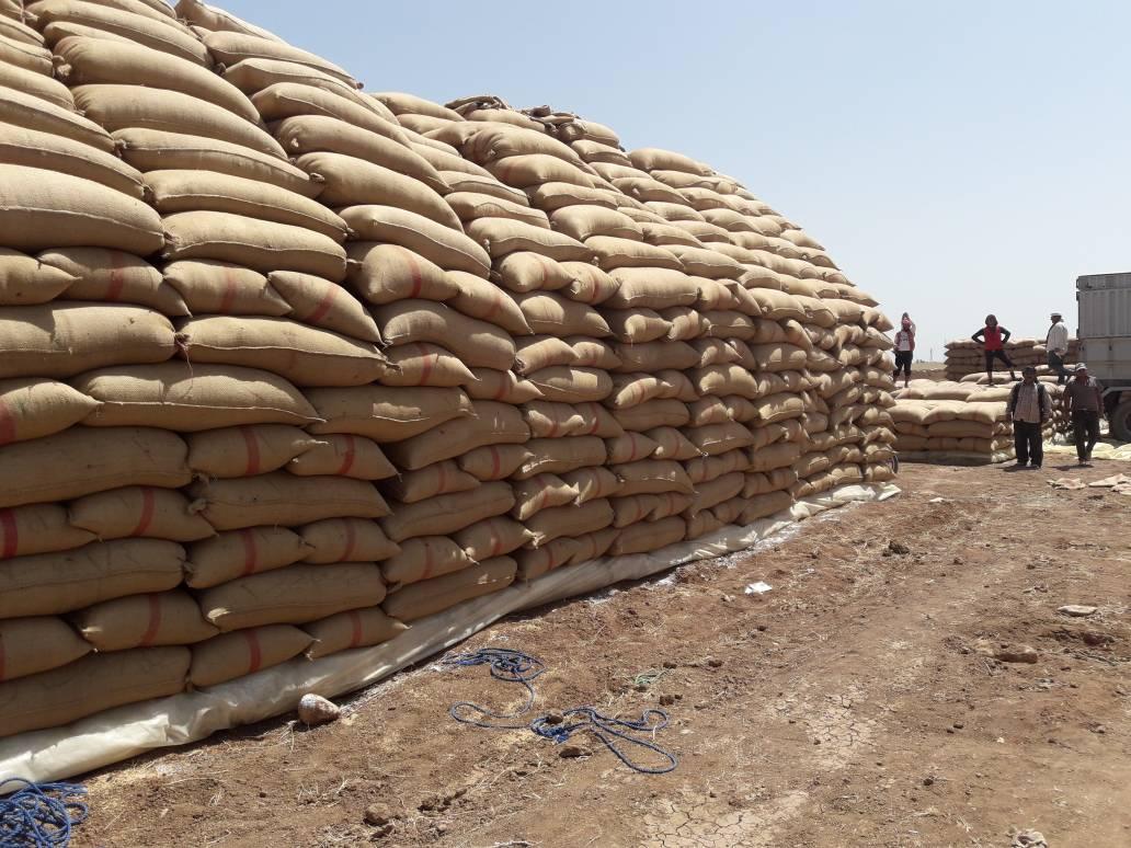 صورة مركز لتسويق الحبوب بريف الحسكة