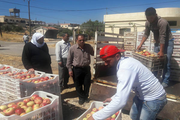 Photo of الغربي لـ«الوطن»: عقد تصديري لروسيا.. لا خوف على محصول التفاح