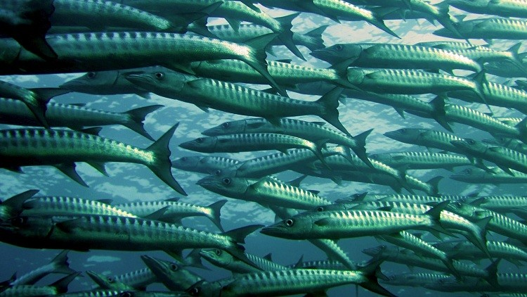 Photo of أسراب الأسماك تجتاح مستشفى في الهند (فيديو)