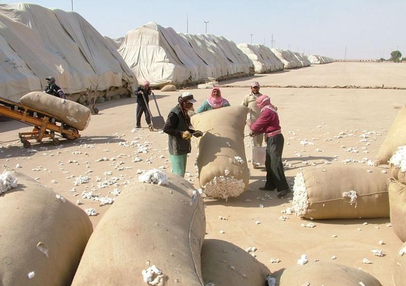 Photo of 18 ألف طن قطن في الحسكة سوقت لمحالج المنطقة الوسطى