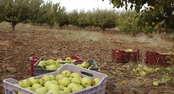 "Photo of بدء استلام التفاح المتضرر.. و""عصير الجبل"" للسورية للتجارة"
