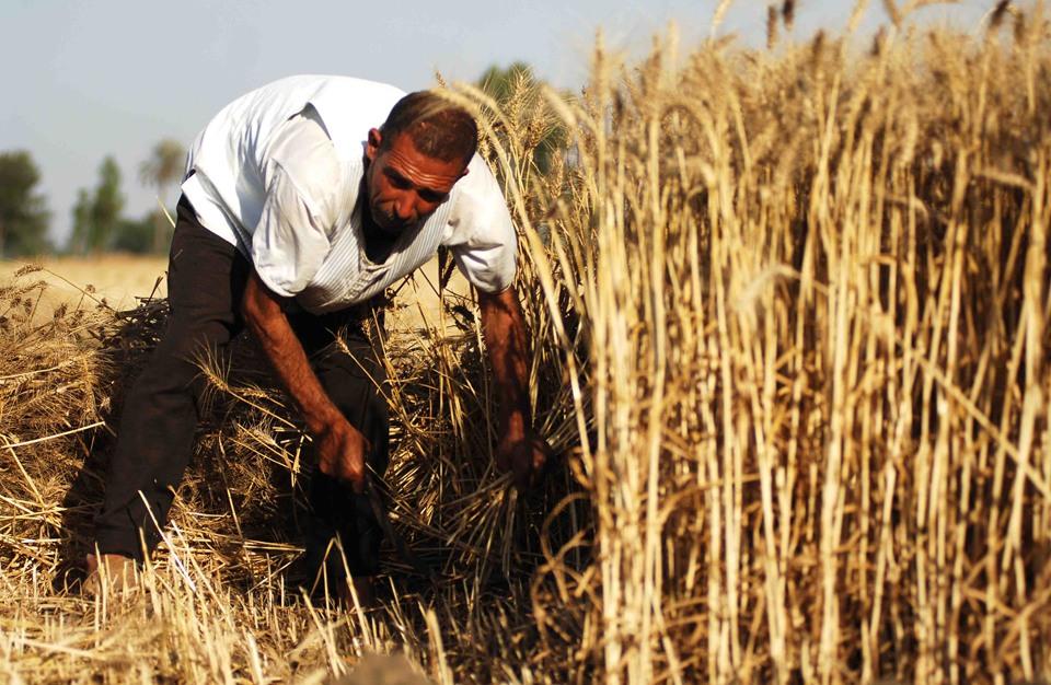 Photo of 400 فلاح استفادوا من منحة القمح والشعير في القنيطرة