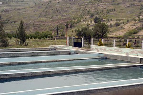 Photo of بقيمة 316 مليون.. تنفيذ محطة معالجة لمياه الصرف الصحي بريف حمص عن طريق النباتات