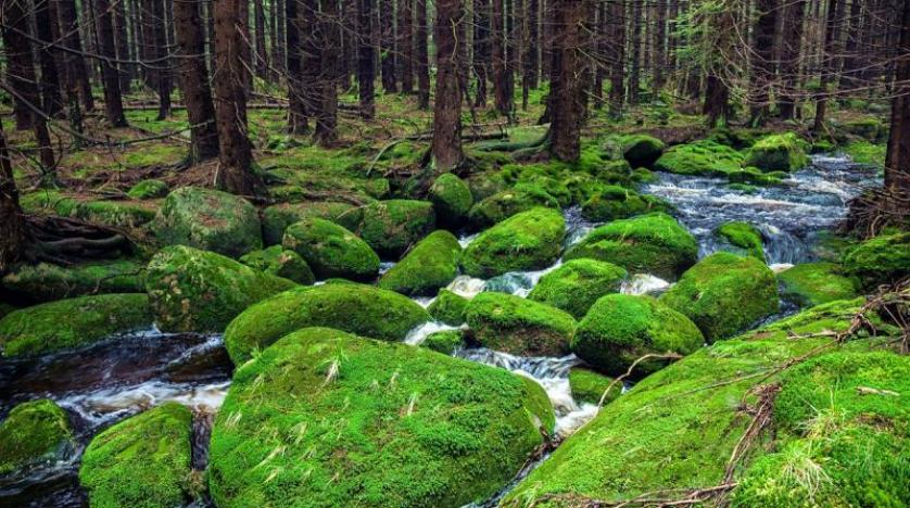 "Photo of لإطالة العمر.. اليابانيون ينصحون بـ""استحمام الغابات"""