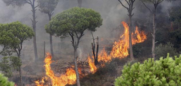 Photo of قبل حلول الصيف.. خطة لمواجهة الحرائق المحتملة في سهل الغاب