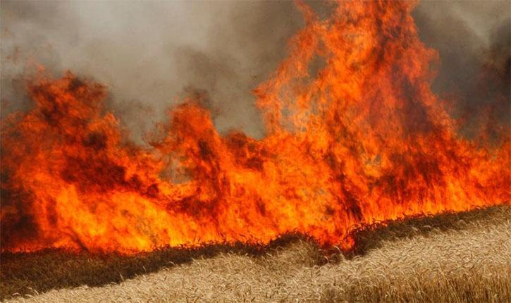 Photo of ١٤ ألف دونم طالتها الحرائق في السويداء منها ٤١٠٠ دونم من القمح و الشعير