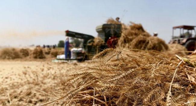 Photo of 41 مليار ليرة قيمة الأقماح المسلمة لمراكز الحبوب بحماة