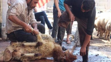 Photo of هل تنجح حلب في كبح الذبح العشوائي في العيد؟