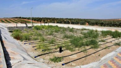 Photo of تدشين محطة لمعالجة مياه الصرف الصحي بطريقة النباتات بقيمة 315 مليون ليرة بريف حمص