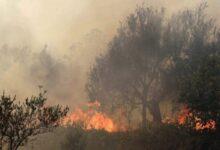 Photo of مدير الحراج: حرائق الغابات حصلت بفعل بشري ولا علاقة للطبيعة