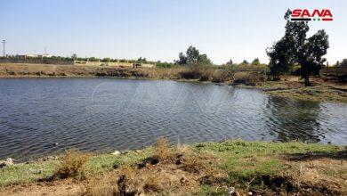 Photo of بحيرة المزيريب بريف درعا تستعيد مياهها تدريجياً