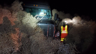 Photo of حدث غريب.. غابة من الأعشاب الجافة تبتلع السيارات (صور وفيديو)