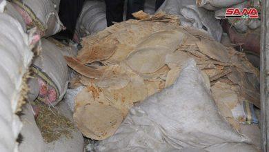 Photo of كميات هائلة من الخبز تذهب مباشرة من الأفران إلى مخازن الأعلاف!