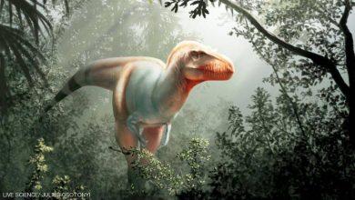 "Photo of اكتشاف ""حاصد الموت"".. فصيلة جديدة من الديناصورات"
