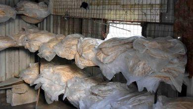 صورة معاون وزير «التموين» لـ«الوطن»: سيتم ضبط التلاعب ببيع الخبز عبر البطاقة