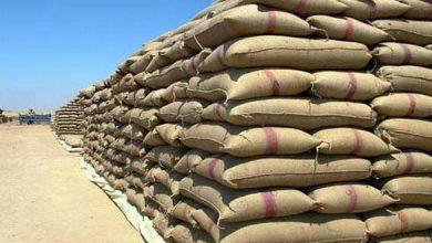 Photo of مدير «السورية للحبوب» لـ«الوطن»: استلام القمح في ٤٩ مركزاً من الساعة 7 صباحاً حتى 7 مساءاً اعتباراً من الغد