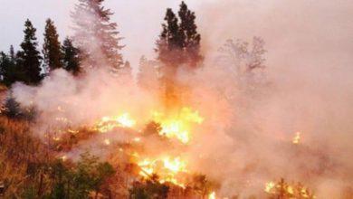 Photo of 47 حريقاً في طرطوس في خمسة أيام!