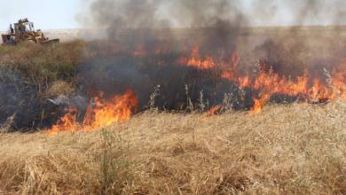 Photo of 180 حريقاً في الغاب هذا الشهر التهمت حراجاً وبقايا حصيد