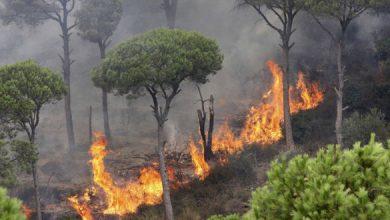 Photo of إخماد 15 حريقاً بينها ٥٠ دونماً محاصيل زراعية و 10 دونمات قمحاً و 20 دونماً مزروعات بريف حمص