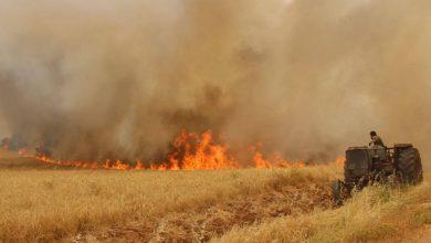 صورة مرتزقة الاحتلال التركي يضرمون النيران بحقول القمح والشعير بريف رأس العين