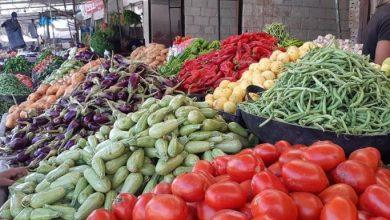 صورة بيع الخضر من المنتج إلى المستهلك مستمر في الجمعيات الفلاحية رغم انخفاض أسعارها