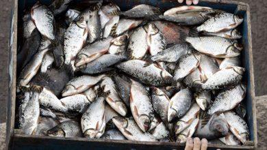 صورة عائلة كاملة تتحسس من السمك.. خليل: ارتفاع الحرارة يساهم في ازدياد حالات التحسس