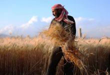 Photo of رئيس مكتب التسويق في اتحاد الفلاحين: شراء 10 آلاف طن من القمح من فلاحي الحسكة