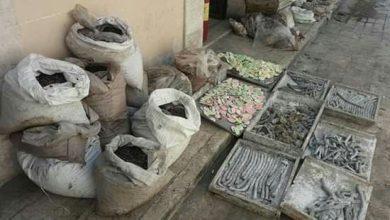 Photo of ضبط طن مواد ضيافة بمخلفات القوارض والحشرات في حلب