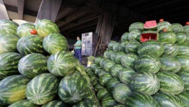 صورة انخفاض أسعار البطيخ «حلم».. وقزيز: تكاليف إنتاجه تضاعفت 5 مرات هذا الموسم