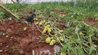Photo of تعويض 441 مزارعاً متضرراً منذ بداية 2020