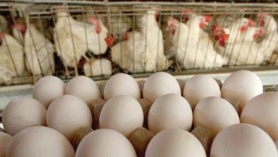صورة كيلو الفروج في السوق يزيد حتى ألف ليرة على تسعيرة «التموين» وصحن البيض يزيد 1600 ليرة!