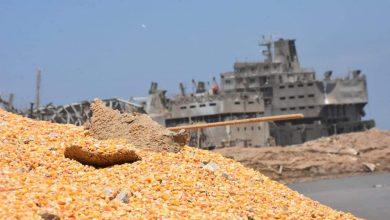 Photo of مدير «الحبوب» لـ«الوطن»: لا تأثير لانفجار مرفأ بيروت على استيراد القمح في سورية