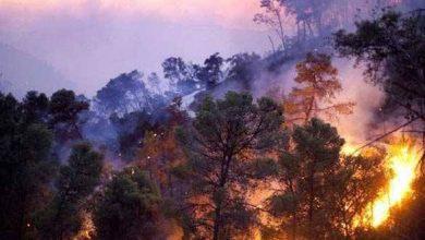 """صورة حريق كبير في جبل نبل الخطيب في الغاب.. عليشة لـ """"الوطن"""": لم نستطع حتى الآن السيطرة على الحريق"""
