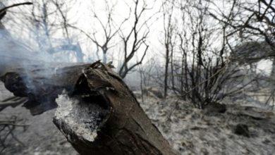 صورة إطفاء كل الحرائق التي اندلعت في غابات طرطوس