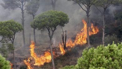 صورة تطويق النيران في الحريق قرب الحدود السورية اللبنانية والعمل جار على إخمادها