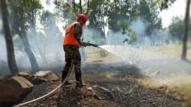 صورة 3800 دونم أضرار الأشجار المثمرة نتيجة الحرائق بحمص