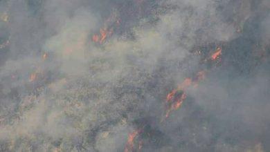 صورة إخماد حريق كبير في أحراج بعيون… والنيران تتجدد في أحراش قرب علي بريف حمص الغربي