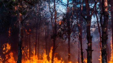 """صورة """"الزراعة"""" تكشف أسباب حرائق الغابات ومن خلفها.. والقبض على بعض المتورطين"""