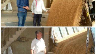 صورة سعر الربطة يصل إلى 3 آلاف ليرة.. لليوم الثاني أزمة الخبز على أشدها بحماة!