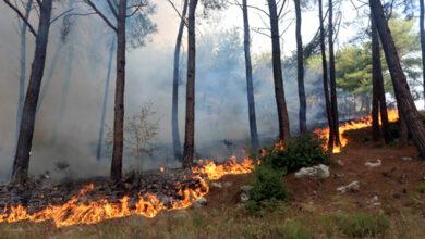 صورة وزير الزراعة: التغلب على نتائج الحرائق بمحاصيل بديلة تساهم بالحصول على إنتاج مادي بسرعة أكبر