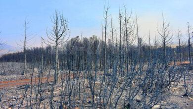 صورة خطة لدعم المتضررين بسبب حرائق اللاذقية
