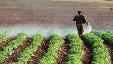 صورة مزارعو السويداء يطالبون بتخفيض أسعار الأدوية الزراعية